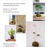 Taller de plantas para niños y padres en Madrid