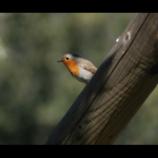 Excursión familiar urbana Pájaros para niños principiantes