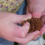 """Excursión BOTÁNICA FAMILIAR """"Un herbario de árboles para niños"""""""