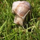 Visita una granja de caracoles